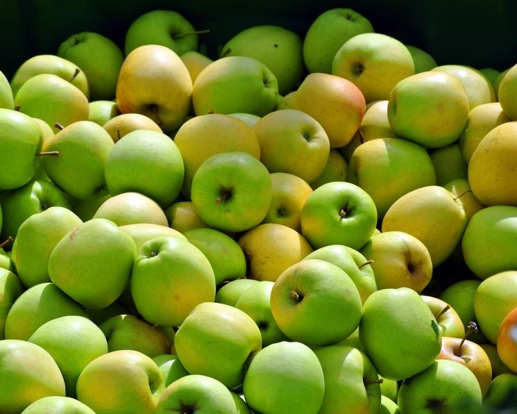 «Южные земли» планируют увеличить мощности хранения фруктов в 2,5 раза до 25 тыс. т к 2021 году