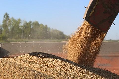 Рентабельность зернопроизводства в сезоне-2018/19 выросла