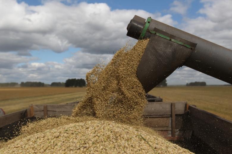 Производство твердой пшеницы