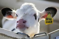 Минсельхоз США: производство молока вРоссии продолжит расти