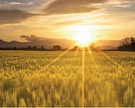 Банки требуют банкротства агрохолдинга «Иволга»