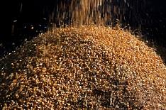 «Русагро» отправила первую партию кукурузы в Китай