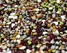 «РЗАгро» вэтом году выведет напроектную мощность семенной завод