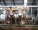 Агрохолдинг «РосАгро» построит молочный комплекс на 3,6 тыс. голов