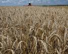 Россия собрала 2,1 млн тонн зерна