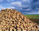 Воронежская область увеличит мощность переработки сахарной свеклы до 50 тыс. тонн в сутки