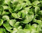 «Белая дача» завершает возведение теплиц для мини-салатов
