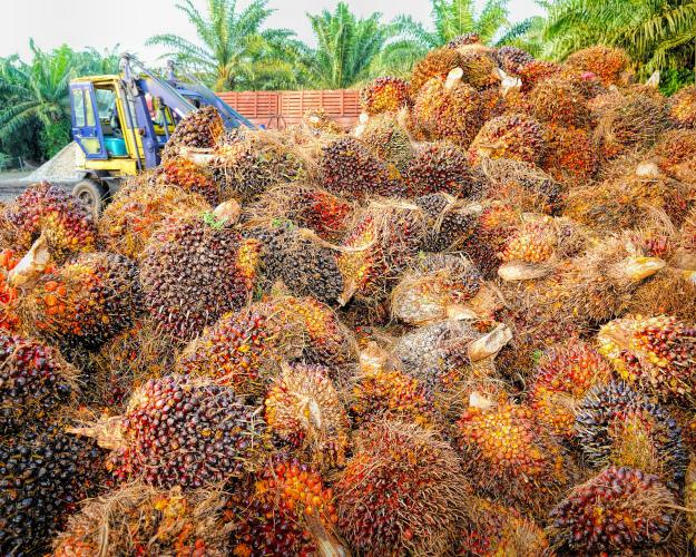Поставки пальмового масла изИндонезии в2016 году выросли на33%