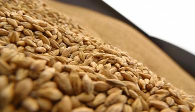 МСЗ повысил прогноз урожая зерна вмире