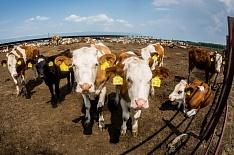 Производители молока объявили на Петербургском форуме о расширении мощностей