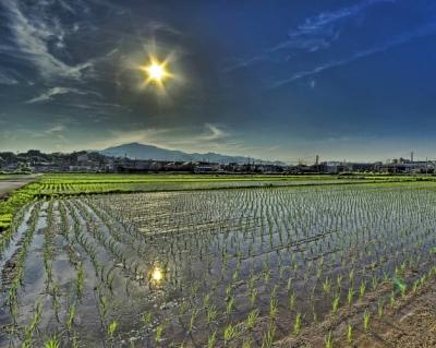 Защитные механизмы растений способны заменить пестициды