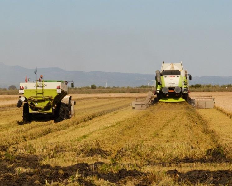 «АФГ Националь» завершает уборку риса