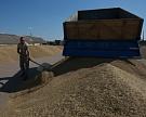 Новые закупочные интервенции на рынке зерна начнутся не раньше сентября