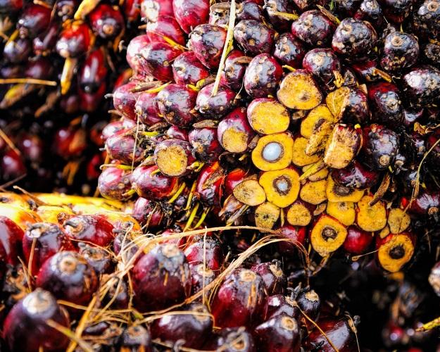 Мировой экспорт пальмового масла может вырасти до34,8 млн тонн