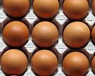 «Пышминская» увеличит производство яиц на27%