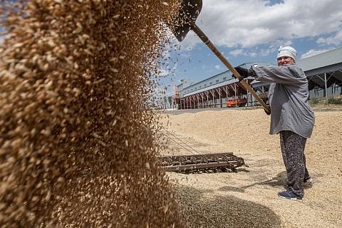 Продажи зерна упали на треть