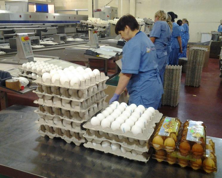 «Комос Групп» купил Лаишевскую птицефабрику