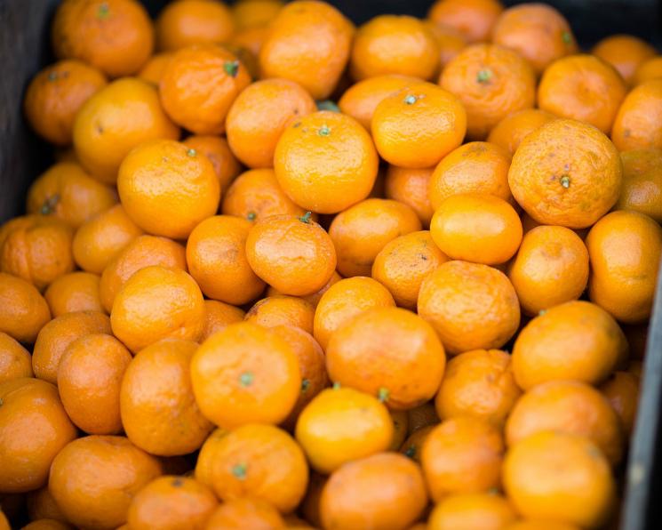 ВАбхазии клоп уничтожил половину урожая мандаринов