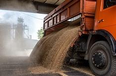 Экспортеры назвали критической ситуацию с перевозками зерна