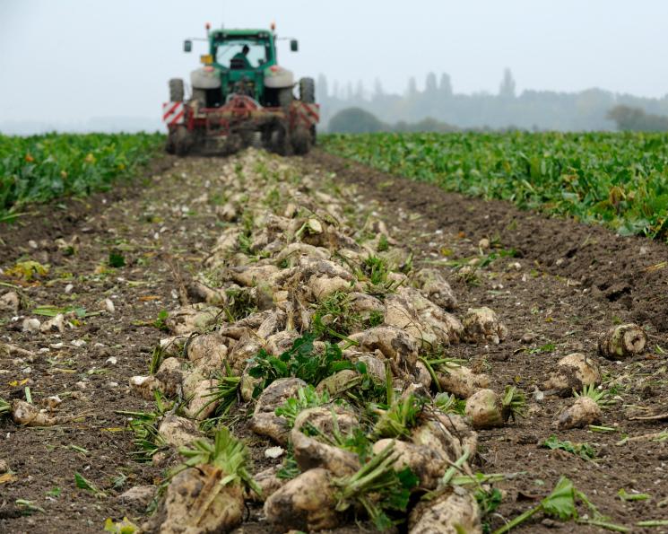 Свеклосахарная отрасль остается в кризисе. Цены на сахар в сезоне-2018/19 могут быть еще ниже, чем в предыдущем сельхозгоду