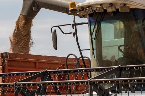 Урожай зерна в Сибири прогнозируется ниже прошлогоднего