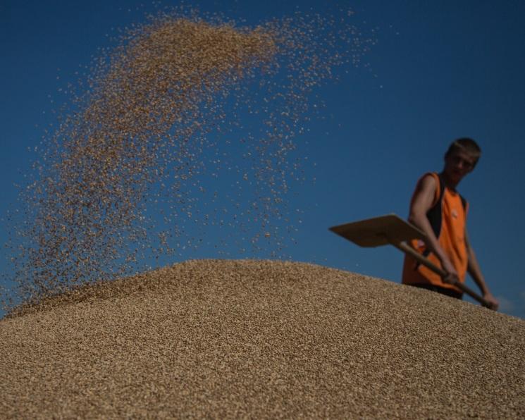 Вреспублике собрано 705,3 тыс. тонн зерна