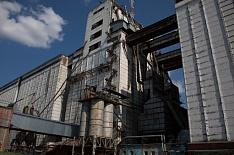 Минсельхоз озвучил цены закупки в госфонд зерна урожая-2019
