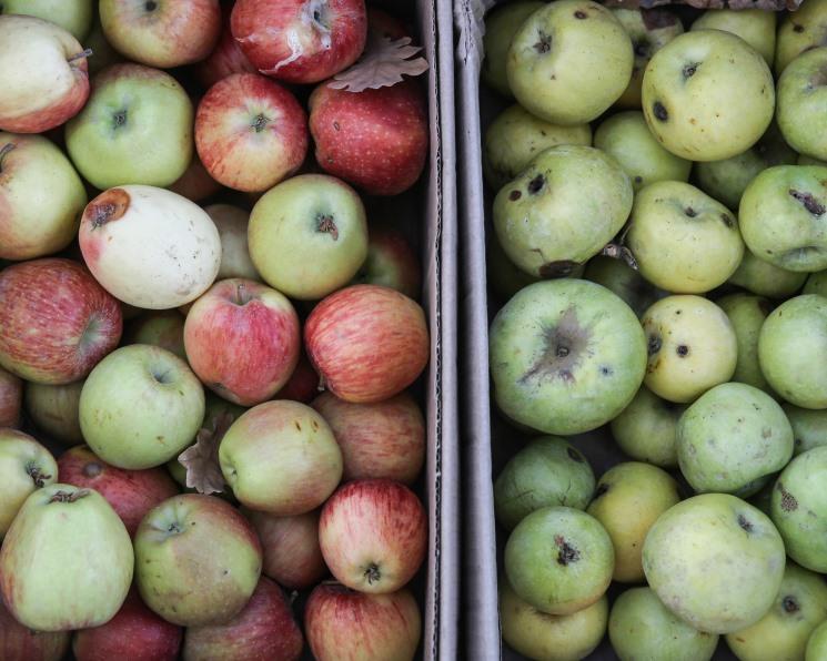 Россельхознадзор запретил ввоз белорусских яблок и груш