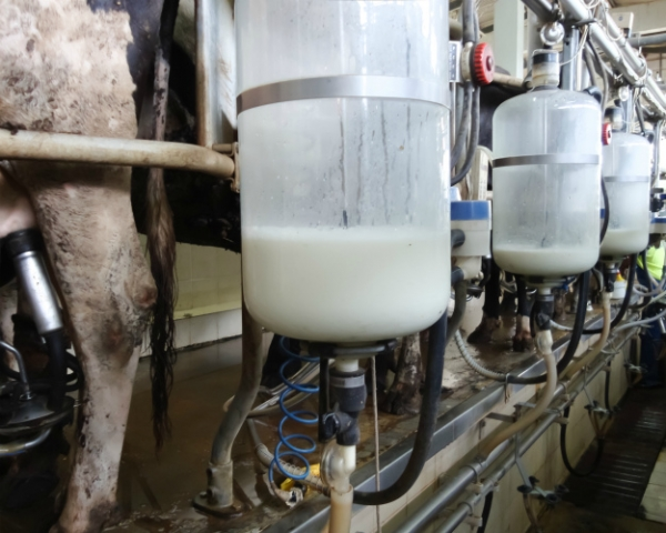 Отсезонности пока неуйти. Объемы производства молока по-прежнему зависят отвремени года