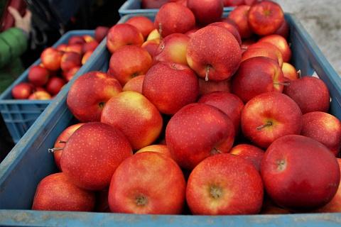 В Сибири и на Дальнем Востоке могут подорожать фрукты