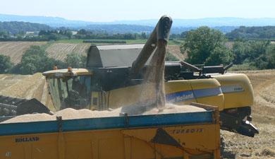 Липецкий урожай— 3 млн т