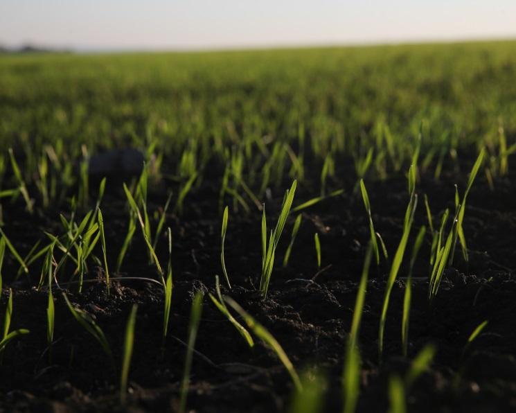 Площадь озимых вплохом состоянии увеличилась на360 тысяч гектаров
