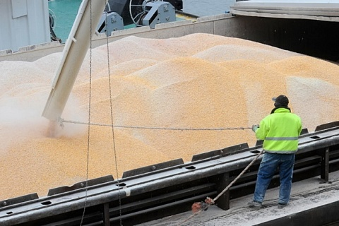 Экспорт зерна в 2020 году может увеличиться до 48 млн тонн