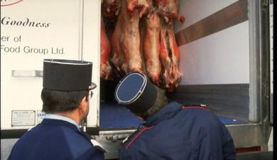 Канадскую свинину разрешили