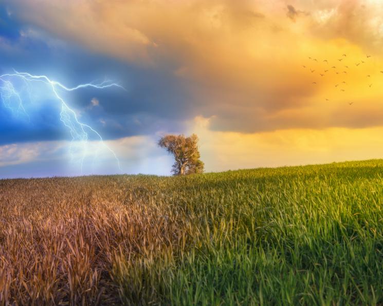 Погода становится нервной. Как глобальные изменения климата влияют на сельское хозяйство