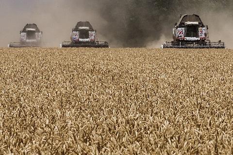 Опрос: что думают отраслевые эксперты о зерновой стратегии-2035
