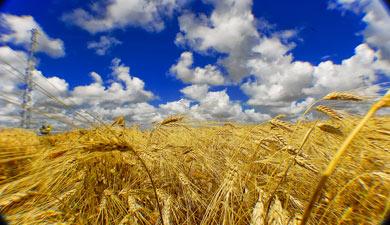 Сельхозпроизводство ушло вминус