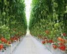 Через два года Подмосковье обеспечит себя овощами на 125%