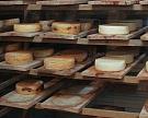 ВПодмосковье может появиться сырный хаб
