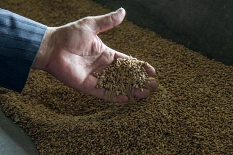 Опрос: как в растениеводстве увеличились затраты на производство