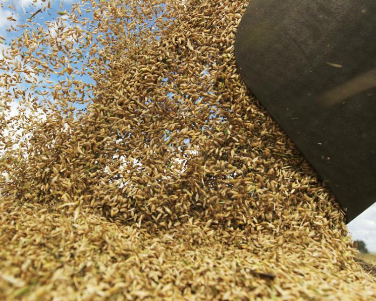 Минсельхоз США повысил прогноз мирового сбора пшеницы