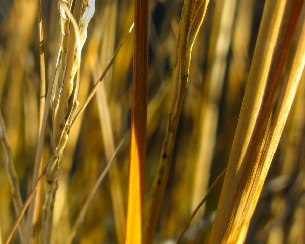 Раскрыт механизм защиты растений