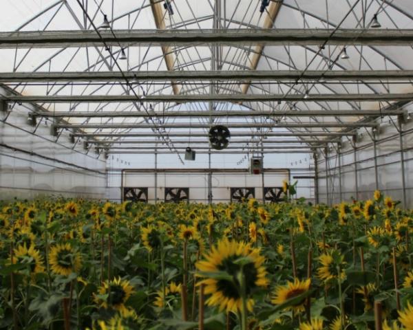 DuPont Pioneer открывает Технологический центр поизучению полевых культур