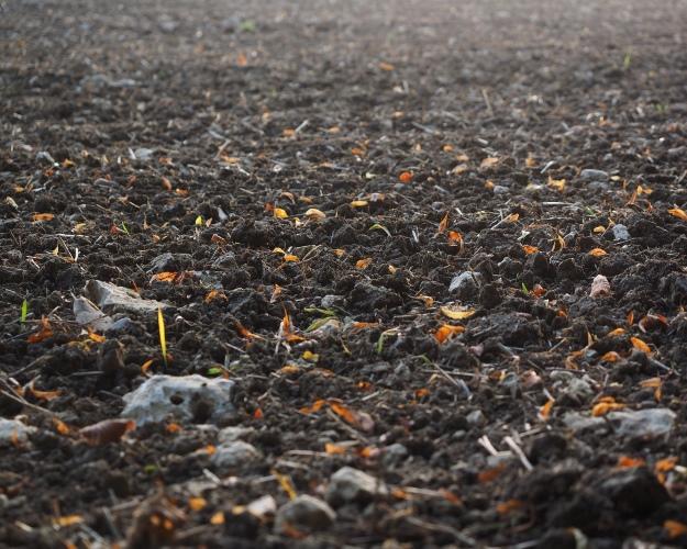 «Черкизово» купит сельхозпроизводителя за5 млрд руб.