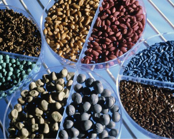 Bayer в ближайшие четыре года вложит в развитие направления Crop Science около €2,5 млрд