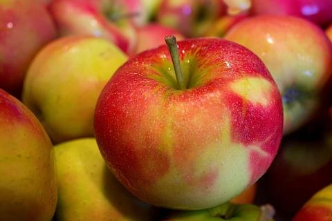 Минсельхоз прогнозирует рекордный урожай фруктов и ягод
