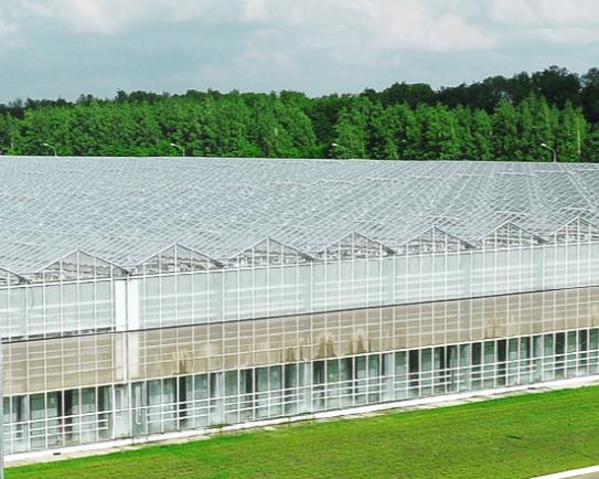 «Долина овощей» вложит 9млрдруб. врасширение тепличного комплекса вЛипецкой области с35,2 гадо67,7 га
