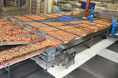 «Волжанин» увеличит объемы производства яйца на 18%