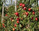 Кубань может компенсировать садоводам до 90% затрат