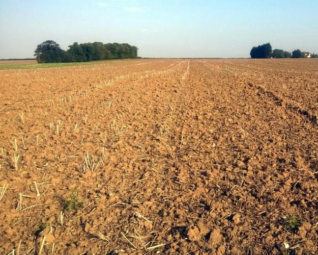 Рейтинг владельцев сельхозземель: утоп-5 компаний 3,2 млн гектаров